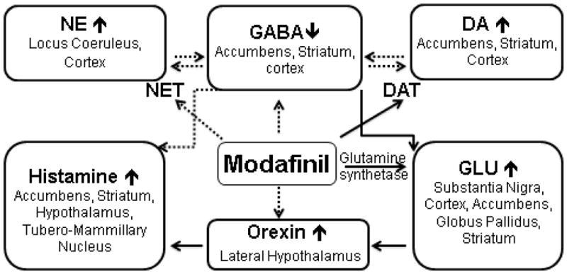 graf prezentujący mechanizmy działania modafinilu