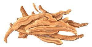 Grzyby Reishi - Ganoderma Lucidum - właściwości zdrowotne