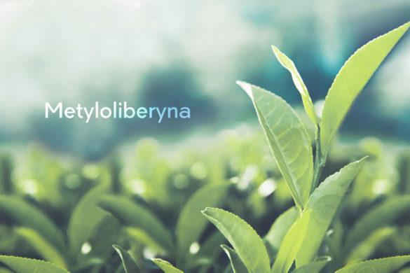 Liście herbaty - Metyloliberyna - substancja z herbaty podobna do kofeiny i teakryny