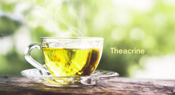Herbata Kucha - Teakryna jako zamiennik kofeiny bez skutków ubocznych