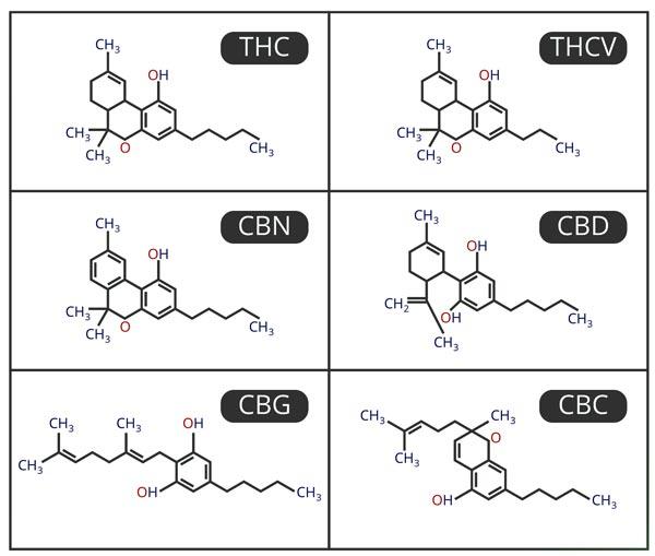 struktury chemiczne poszczególnych kannabinoidów