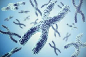 chromosomy i telomery
