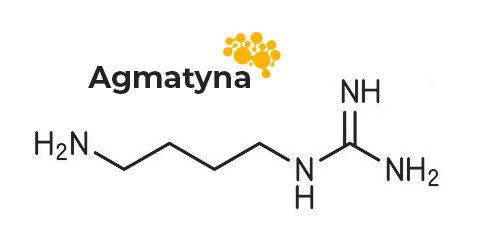 struktura chemiczna agmatyny